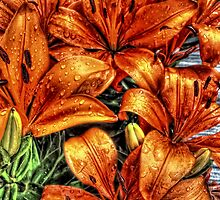 Lily after rain by Simon Duckworth