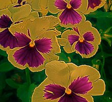 The enchantment of pansies by Julie Marks