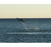 I can fly!!! Dolphin Jump Photographic Print