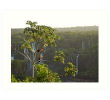 Iguazu toucans1 Art Print