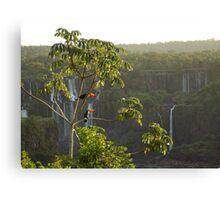 Iguazu toucans1 Canvas Print