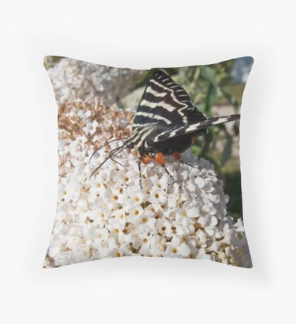 Dingy swallowtail butterfly Throw Pillow