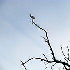 Birds Eye View by Lynda Kerr