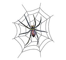 Web Crawler Photographic Print