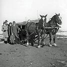 Old Sleigh Team by Al Bourassa
