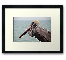 Pelican in Florida Framed Print
