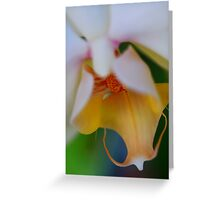 Orchid Softness Greeting Card