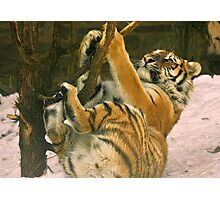 Play Time Photographic Print