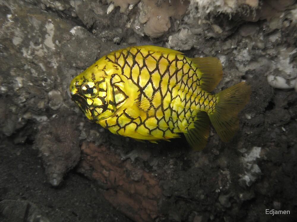 Pineapple Fish by Edjamen
