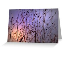 Evening Sun Greeting Card