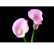 Two Pink Calla Lilies Photographic Print