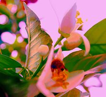 Fruitmaker by ♥⊱ B. Randi Bailey