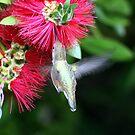 Hummingbird by SKNickel