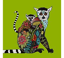 ring tailed lemur love lime Photographic Print
