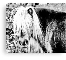 pony portrait in black and white Canvas Print