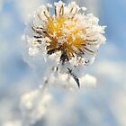 Winter flower by Karl Smutko