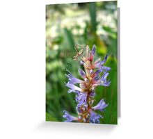 Handsome  Meadow Katydid Nymph Greeting Card