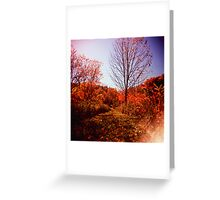 Fall Path Greeting Card