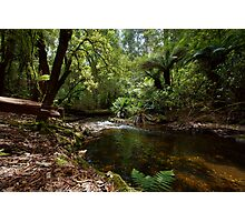 Mt Field National Park, Tasmania Photographic Print