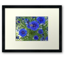 BEE cause i am blue Framed Print