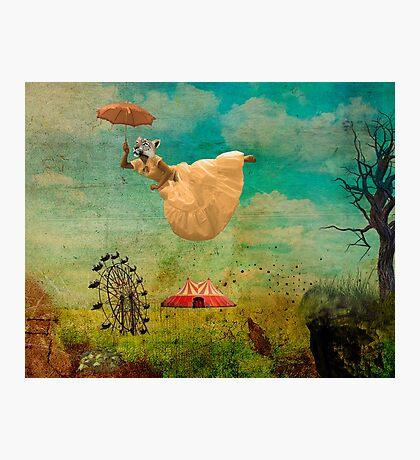 feline dream Photographic Print