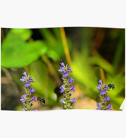 Bees at  Work Poster