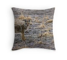 "The Coyote Project - ""Pawsed"" Throw Pillow"