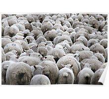 Sheepies Poster
