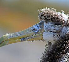 Face only a mother could love.. by Sue  Cullumber