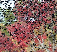 Black Birds in Color by Christopher Kerns