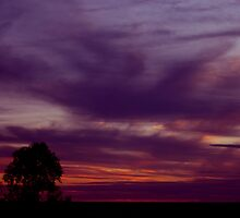 Dark purple sunset with tree silhouette and horizon line. by Marilyn Baldey