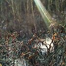 Sun's ray falling onto spider web pools by Nadia Korths