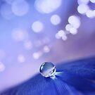 Crystal by Angelique Brunas