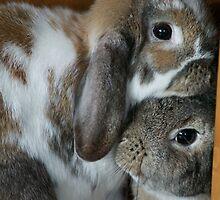 Rabbit Love by ejrphotography