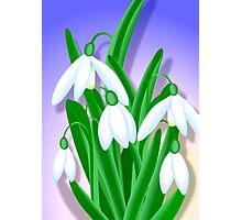 Snowdrops Bouquet Photographic Print