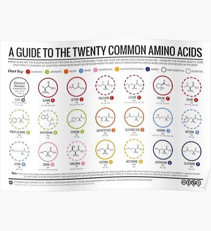 20 Amino Acids - Physiological Structure Version Poster