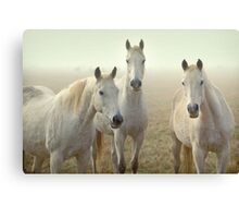 Three Whites Canvas Print