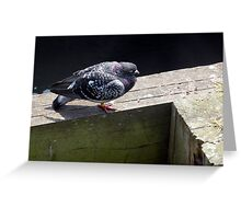PIGEON AT BLYTH (D.E. 2013) Greeting Card