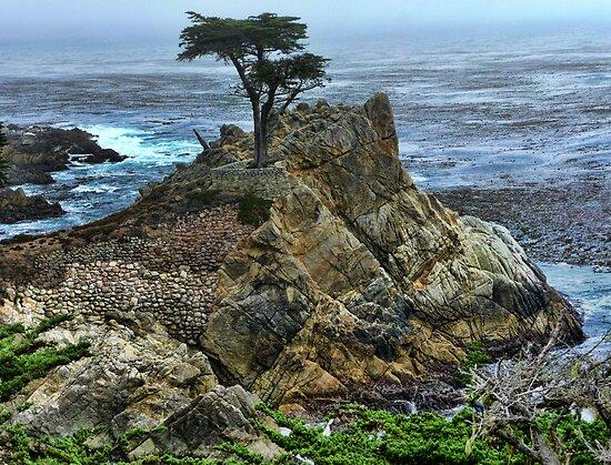 The Lone Cypress by Brett Williams