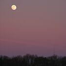 Purple Moon by Rachel Hoffman