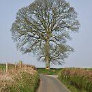 Single tree facing a small Devon lane by peteton