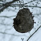 Bee Hive by Dave & Trena Puckett