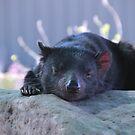 So Sleepy by Asoka