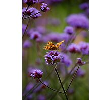 Tiny Wings Photographic Print