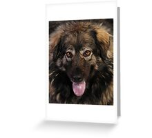 My fluff ball Greeting Card