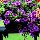 Potted Calibrachoa by T.J. Martin