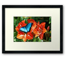 blue grace Framed Print