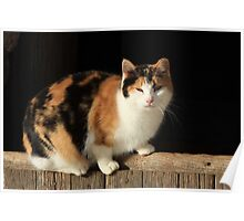 Torty The Barn Kitty Poster