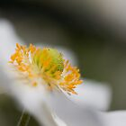 All about the bokeh by benivory