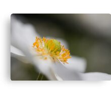 All about the bokeh Canvas Print
